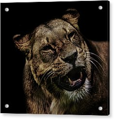 Smile Acrylic Print by Martin Newman