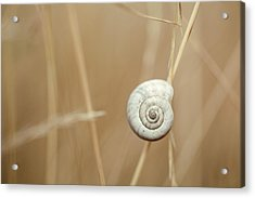 Snail On Autum Grass Blade Acrylic Print by Nailia Schwarz