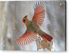 Snow Storm Acrylic Print by Mircea Costina