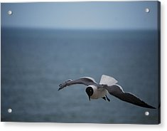 Acrylic Print featuring the photograph Soaring by Debbie Karnes
