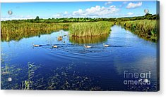 Somerset Levels Acrylic Print