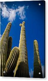 Sonoran Desert Acrylic Print by Patrick  Flynn
