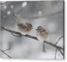 Sparrow Kiss Acrylic Print