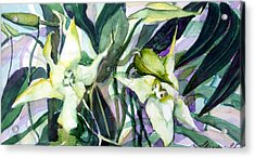 Spider Orchids Acrylic Print by Mindy Newman