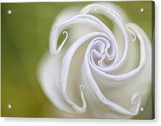 Spiral Acrylic Print by Nailia Schwarz