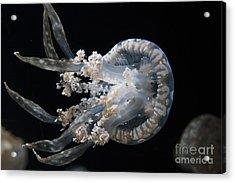 Spotted Jelly Acrylic Print by Jason O Watson
