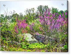 Spring At Devils Den Acrylic Print by Paul W Faust - Impressions of Light