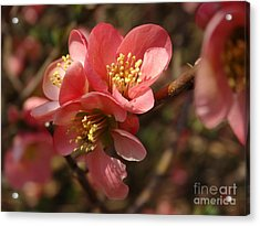 Spring Blooms Acrylic Print by Rebecca Overton