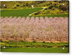 Spring Blossom Acrylic Print