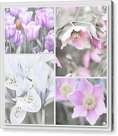 Acrylic Print featuring the photograph Spring Flower Collage. Shabby Chic Collection by Jenny Rainbow