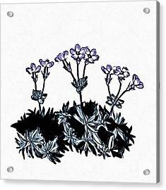 Spring Flowers Acrylic Print by Edward Fielding