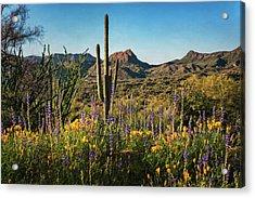 Acrylic Print featuring the photograph Spring In The Sonoran  by Saija Lehtonen