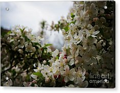 Spring Lanscape Acrylic Print by Celestial Images