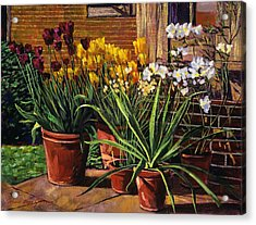 Spring Tulips And White Azaleas Acrylic Print by David Lloyd Glover