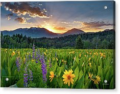 Acrylic Print featuring the photograph Spring's Delight by Leland D Howard
