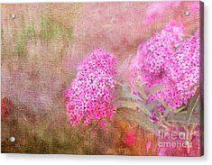 Acrylic Print featuring the photograph Springtime by Betty LaRue