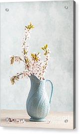 Springtime Blossom Acrylic Print by Amanda Elwell