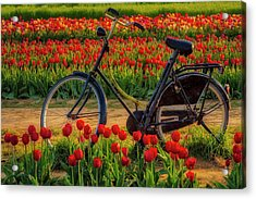 Acrylic Print featuring the photograph Springtime Tulips And Bike by Susan Candelario
