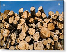 Stack Of Wooden Logs In The Landes Forest Acrylic Print by Sami Sarkis
