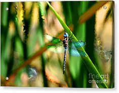 Stained Glass Dragonfly Acrylic Print