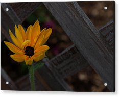 Acrylic Print featuring the photograph Standing Alone by Cherie Duran