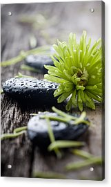 Stones With Water Drops Acrylic Print
