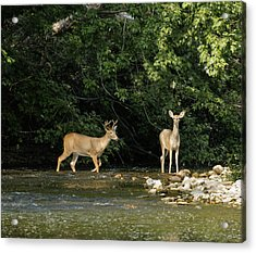 Stream Crossing Acrylic Print by David Lester