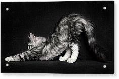 Stretching Acrylic Print by Robert Sijka