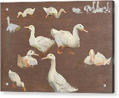 Study Of Ducks Acrylic Print by Alexander Mann