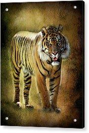 Sumatran Tiger  Acrylic Print by Saija  Lehtonen
