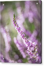 Summer Breezes Through The Heather Acrylic Print