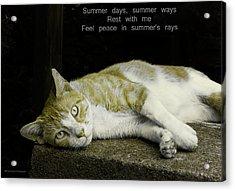 Summer Days Acrylic Print by Michael Taggart II