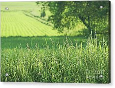 Summer Fields Of Green Acrylic Print by Sandra Cunningham
