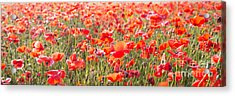 Summer Poetry Acrylic Print by Hannes Cmarits