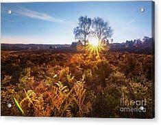 Sun Acrylic Print by Svetlana Sewell