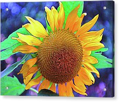 Acrylic Print featuring the photograph Sunflower by Allen Beatty