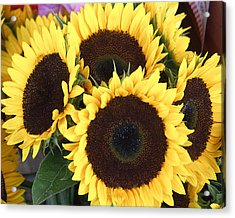 Sunflowers Acrylic Print by Tom Romeo