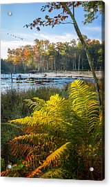 Sunrise In The Swamp Acrylic Print