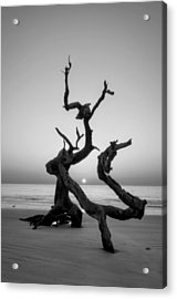 Sunrise On Driftwood In Black And White Acrylic Print