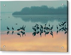 Sunrise Over The Hula Valley Acrylic Print