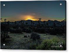 sunset Joshua Tree National Park Acrylic Print