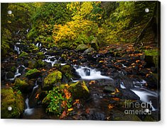 Surrounded By Autumn Acrylic Print by Mike Dawson