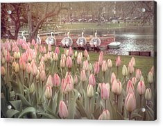 Swan Boats And Tulips - Boston Public Garden Acrylic Print by Joann Vitali
