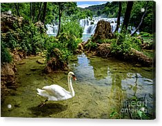 Swan In The Waterfalls Of Skradinski Buk At Krka National Park In Croatia Acrylic Print