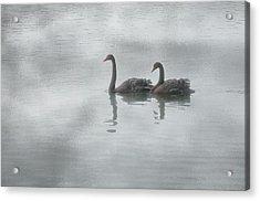 Swan Lake Acrylic Print by Carolyn Dalessandro