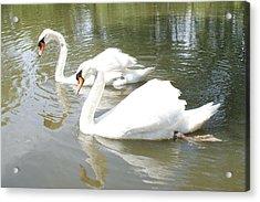 Swan Pair Acrylic Print by Geralyn Palmer
