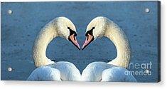 Swans Portrait Acrylic Print