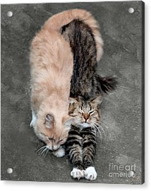 Sweet Couple Acrylic Print
