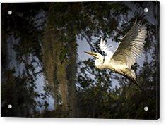 Take Flight Acrylic Print by Marvin Spates