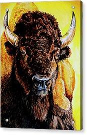 Tatanka Acrylic Print by Robert M Walker
